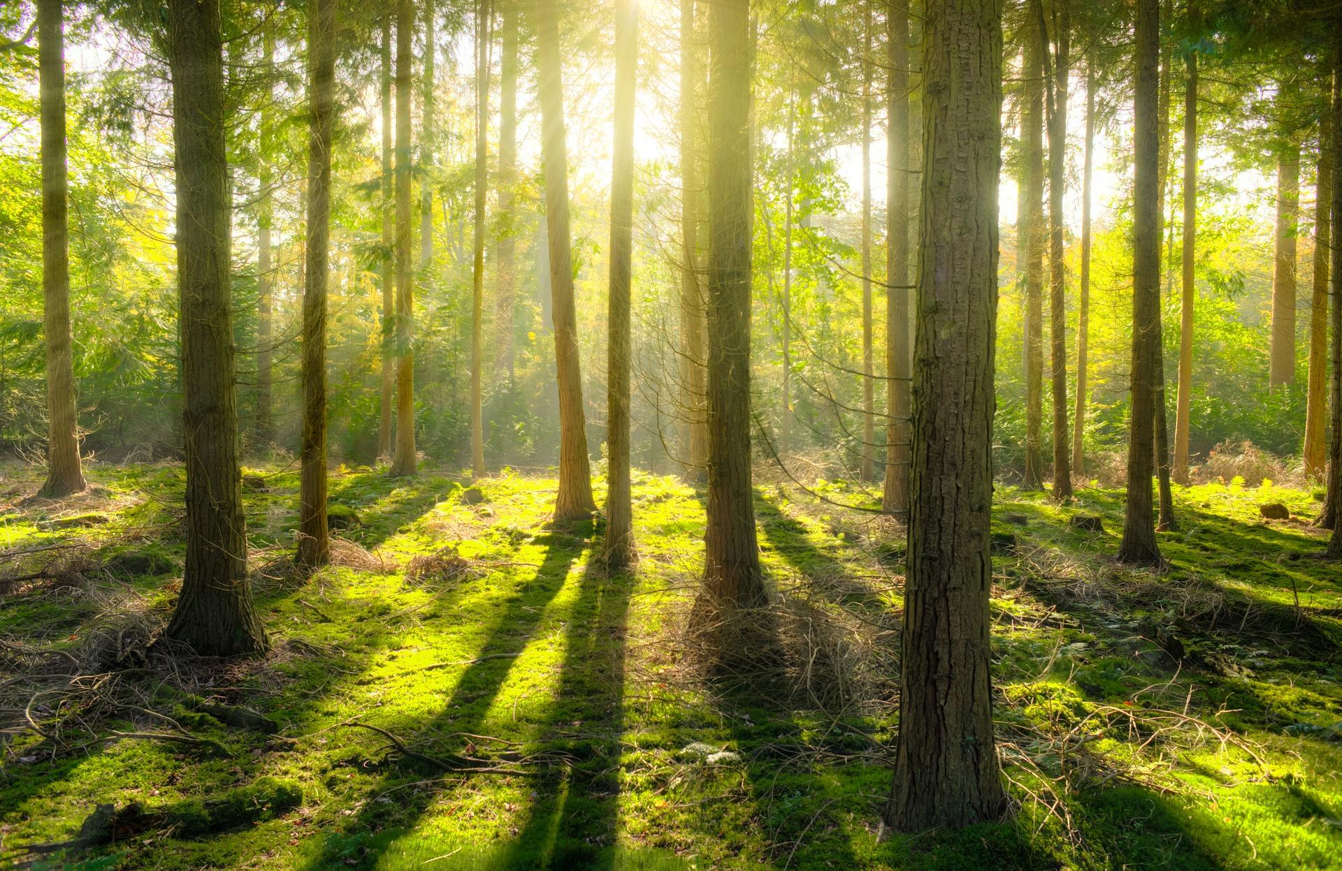 Certifierad solvärme- och biobränsleinstallatör!